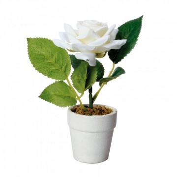 ROSE BLANCHE EN POT